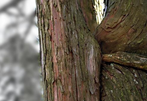 tree_huntington2