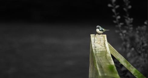 bird_fickr2