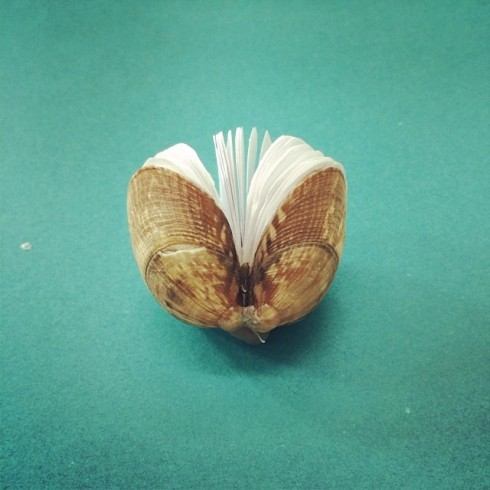 book in a shell