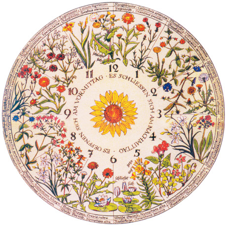 flower clock 2